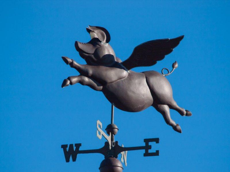 Flying Pig, Hampton NH