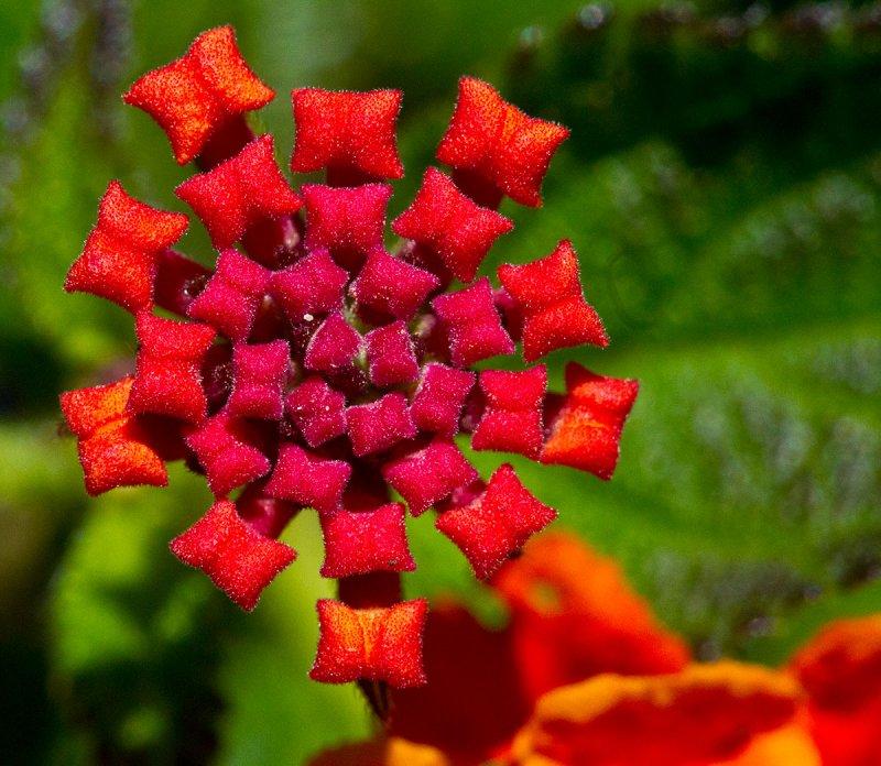 The geometry of nature_MG_3039.jpg