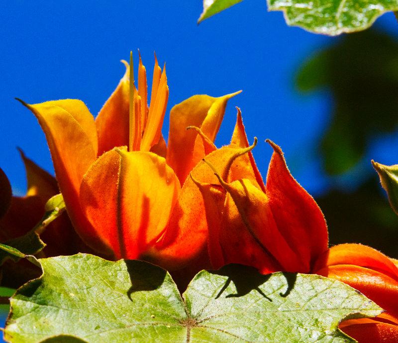 Orange and blue  _MG_9131.jpg