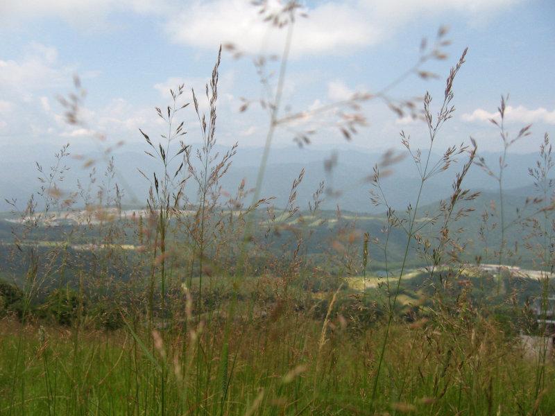 Highland meadow