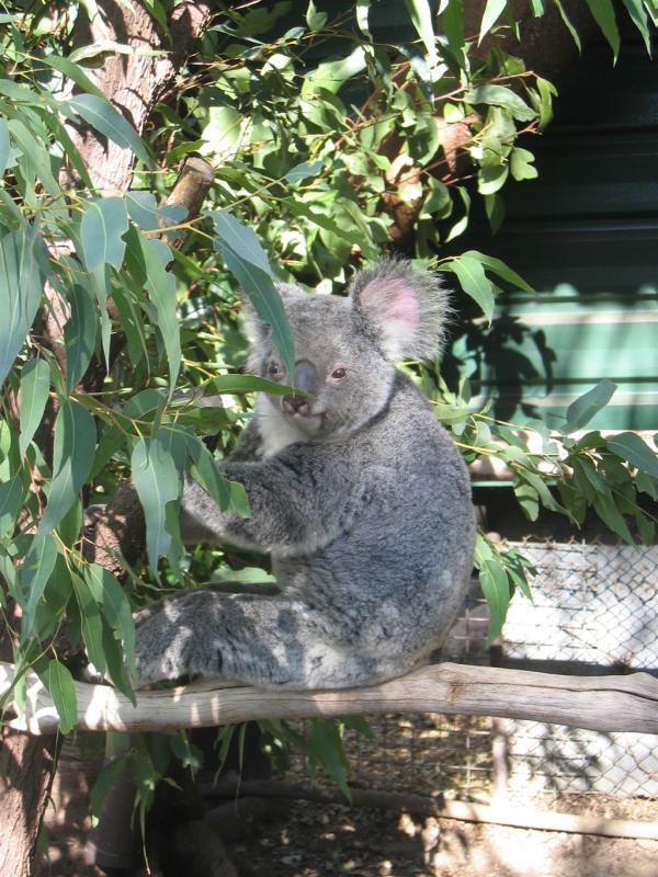 Lone Pine Koala Sanctuary 096.jpg