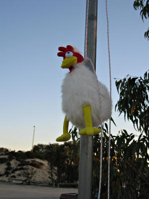 They strangled the chicken and slung him up the flagpole!!