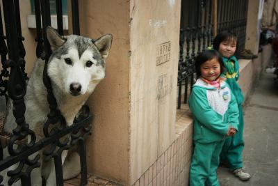 Take Me a Photo, Shanghai, China, 2006
