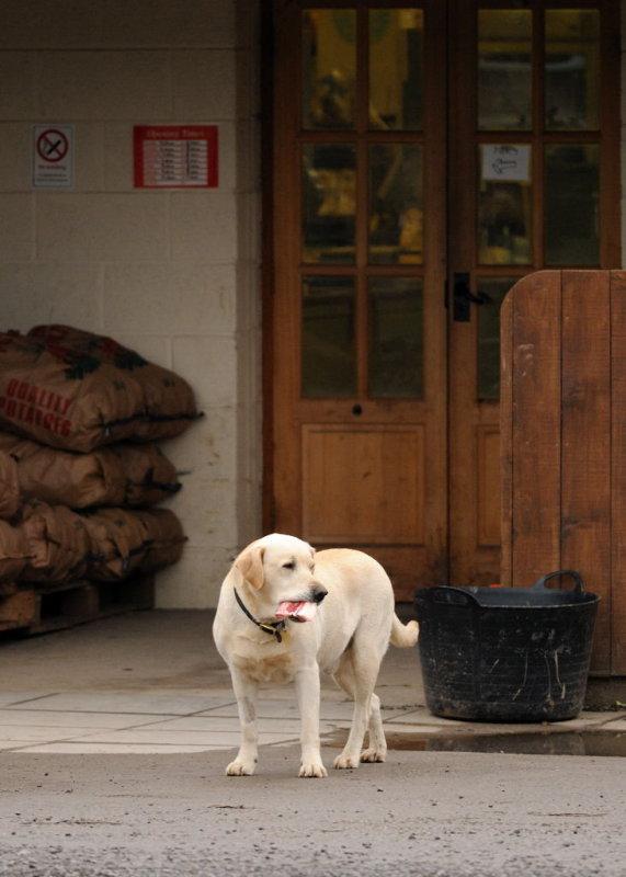 Frome Valley Farm Shop Dog