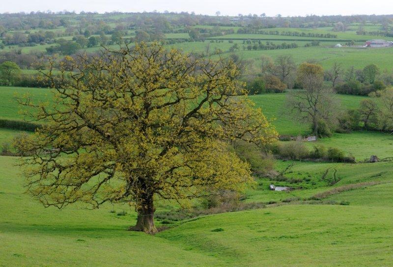 7805 Martins tree.jpg