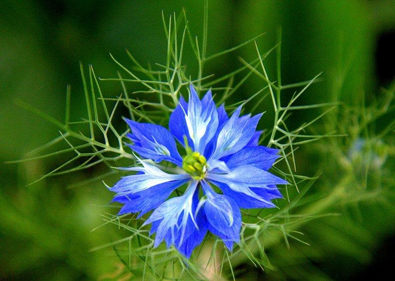 wonderous blue