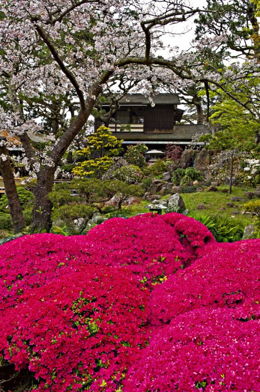 Tea Garden in Bloom