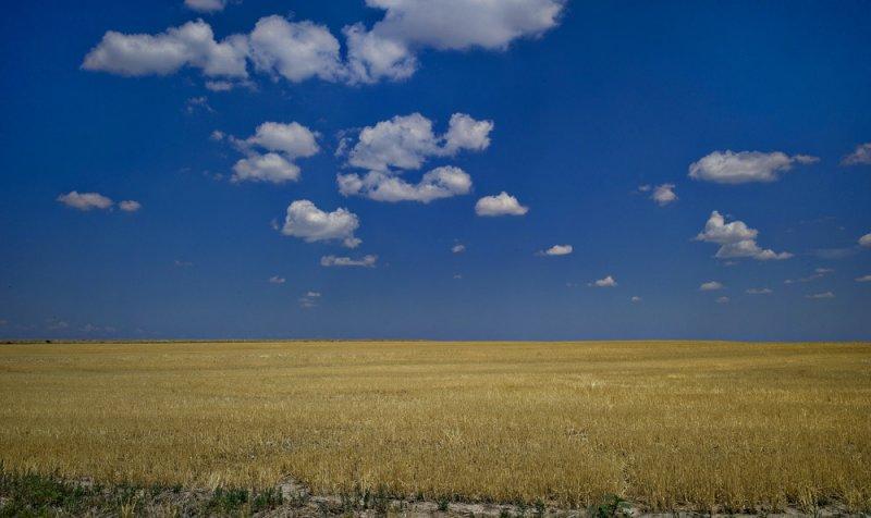Prairie Afternoon