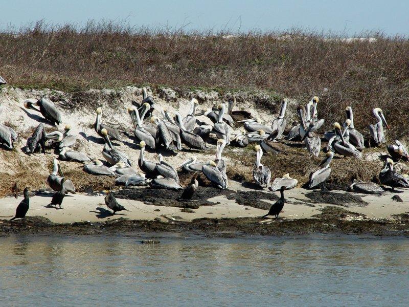 Ocean Birds A,a