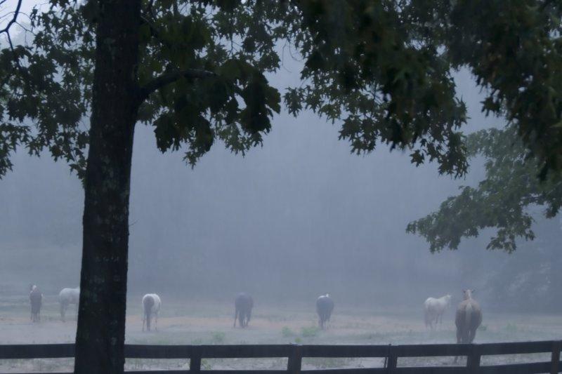 wet days