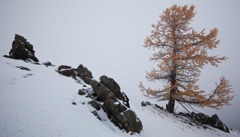 Larch & Rocks At Slate Pass <br> (SlatePass102411-018-1.jpg)