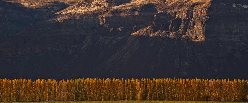 Poplars & Cliffs <br> (T3_102911-236-5.jpg)
