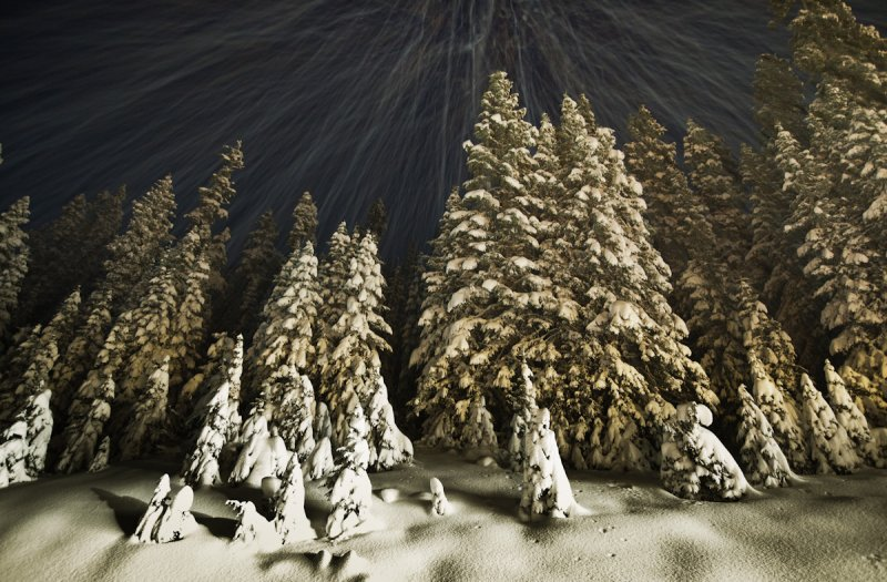 North Cascades Highway: <br> Trees Lit By Snowplow Lights <br>(SR20_111411-105-3.jpg)*