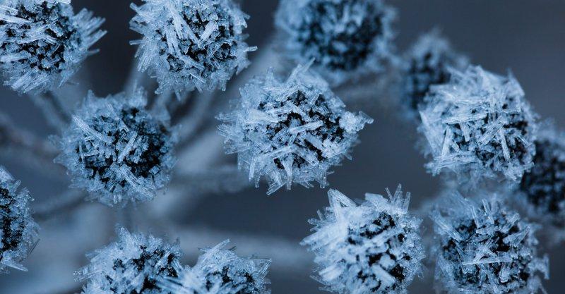 Frost Flower <br> (MF122211-13-1.jpg)