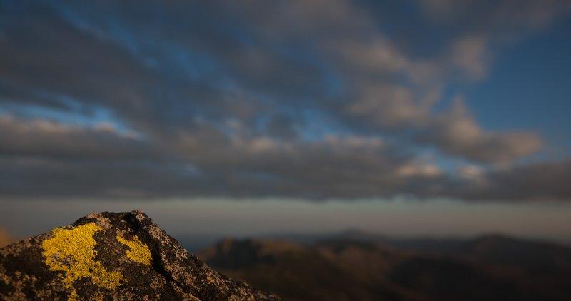 Lichen, Tiffany Mountain Summit <br> (Tiffany_081412-89-1.jpg)