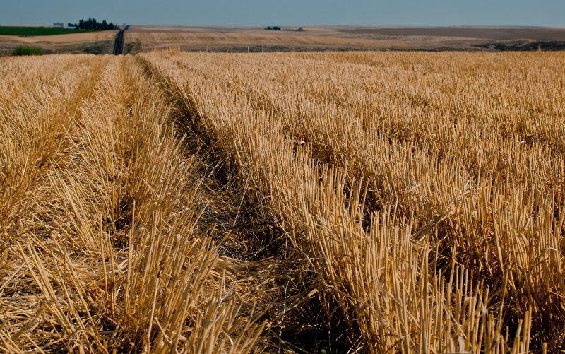 Harvested Wheat Field <br> (SE_WA_082812_0121-15.jpg)