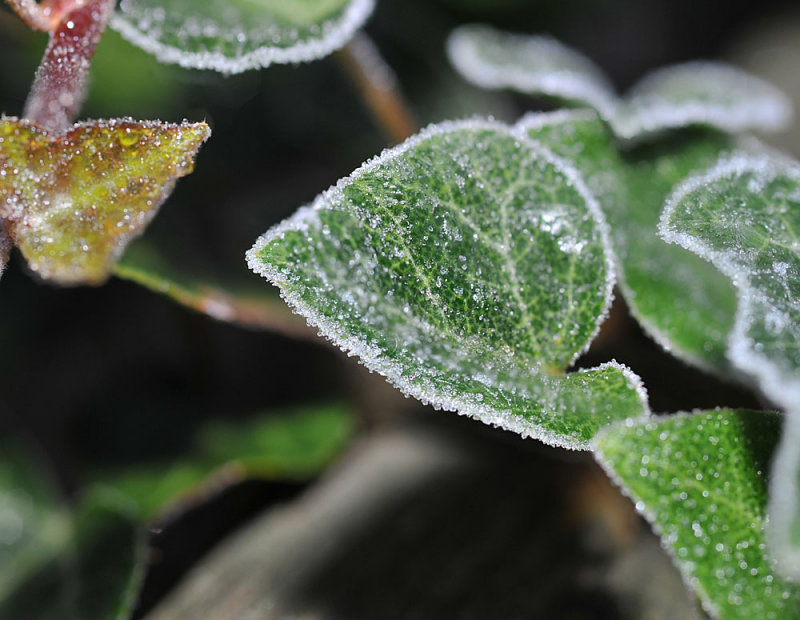 First Frost of the Fall