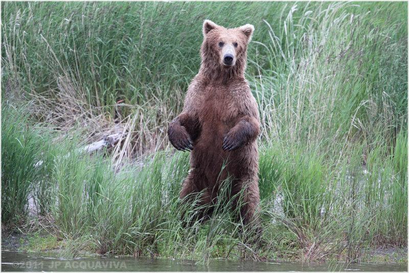 standing bear 4337.jpg