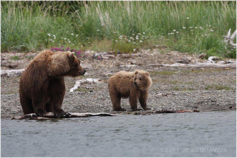 mom and cub 5842.jpg