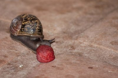 Opening of the Snail Smorgasbord
