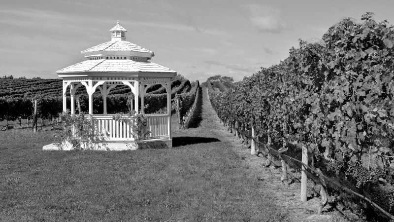 Pellegrini Vineyards, Cutchogue