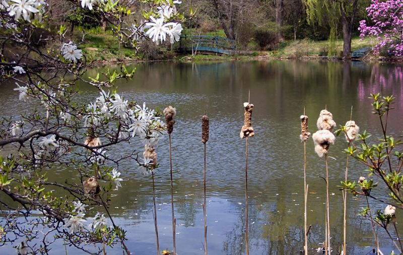Spring Photo2
