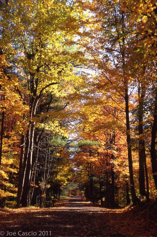fall_road_01.jpg