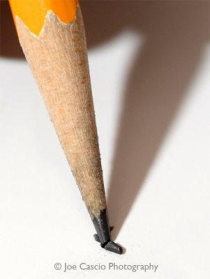 broken_pencil_tip_02.5.jpg