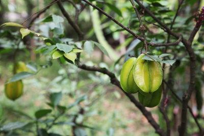 Star Fruits.