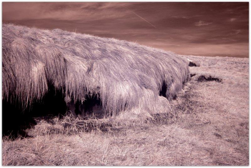 IR Grass