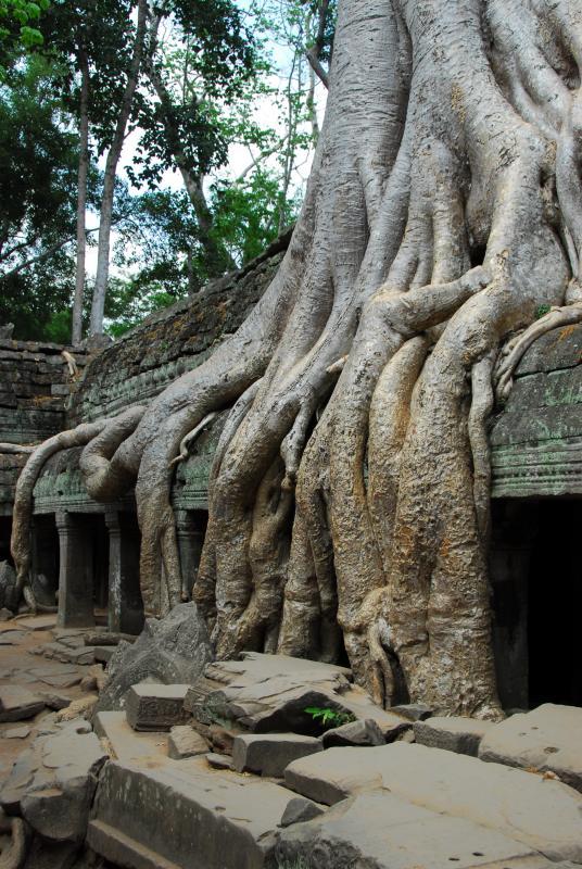 Ta Prohm Roots