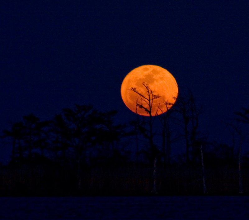 The rarely seen super moon in a rapid rise