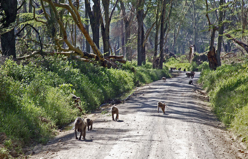Baboon Alley