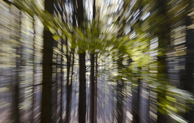zoomed forest