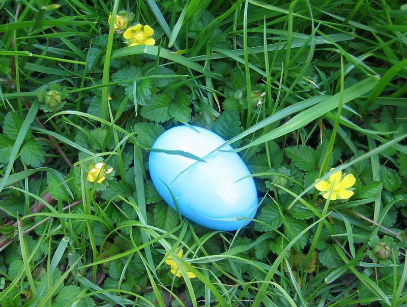 Leftover Easter Egg in a Nest of Buttercups