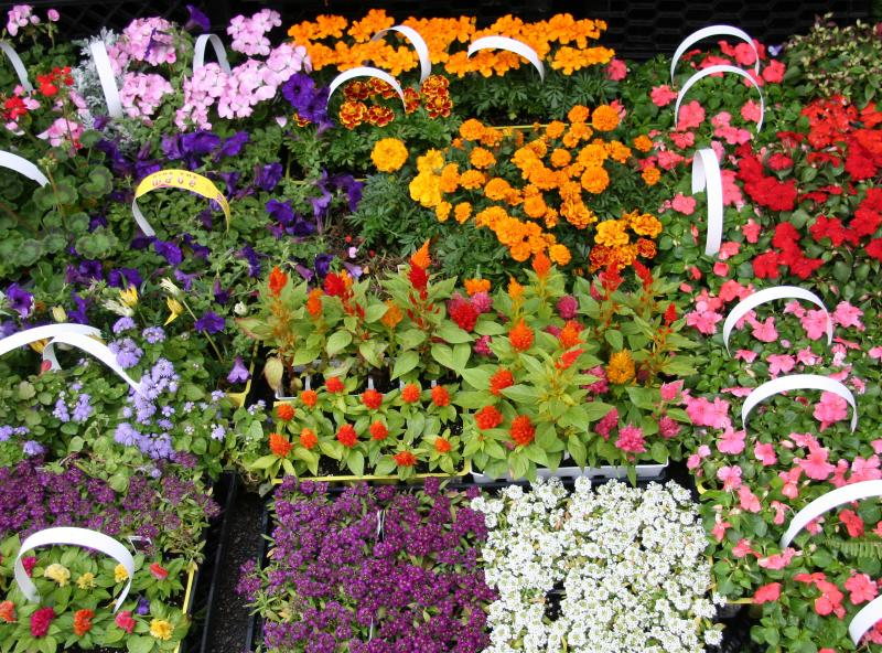 Florists Early Summer Flowers for Sale