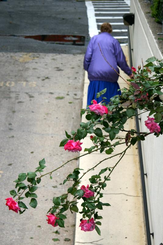 Beyond a Spray of Roses