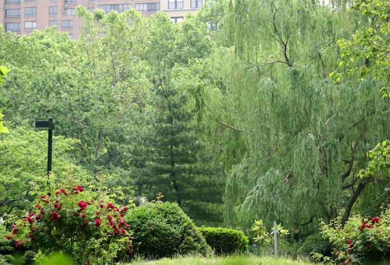 Garden View - Roses, Dogwood, Pine & Willow