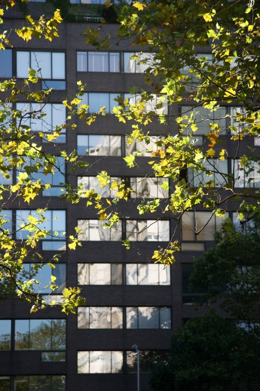 Sycamore Foliage & Mercer Street Residence