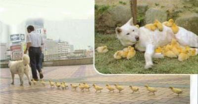 dog- ducks