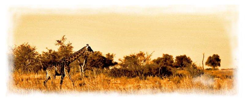 Makgadikgadi Pan Botswana: a quote from Blixen