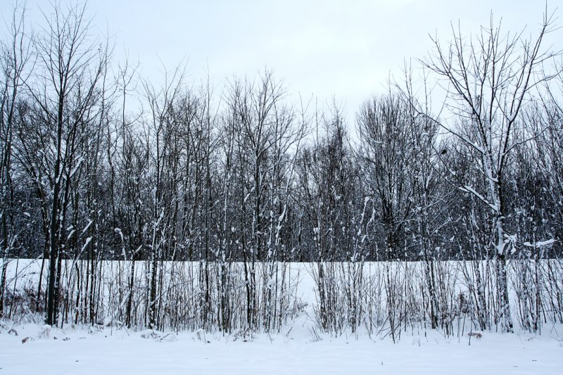 The Grey and the Snow
