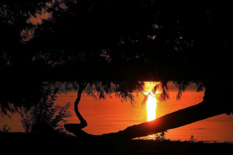 SUNSET REFLECTION & TREES