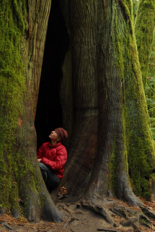 The Giants of Cathedral Grove