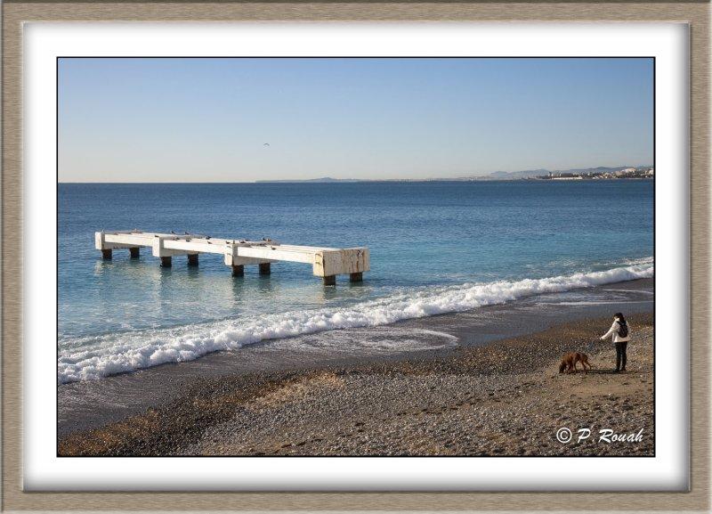 Promenade canine en Baie de Nice - 0604