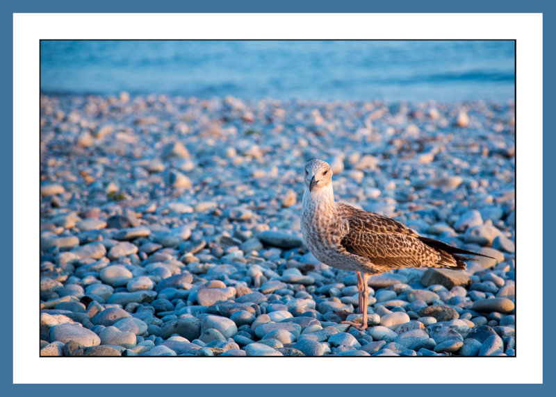Evening bird - 3971