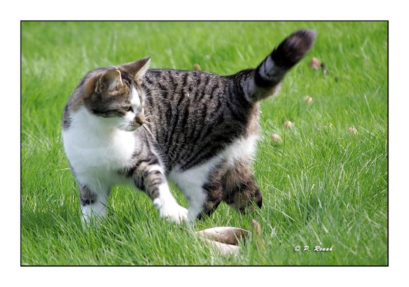 Neighbors cat1