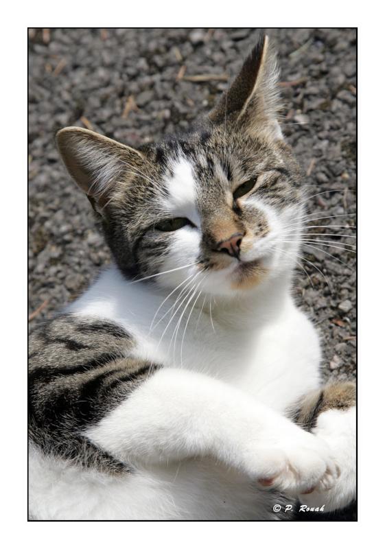 Neighbors cat2