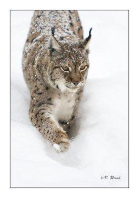 Snow walk - 1059