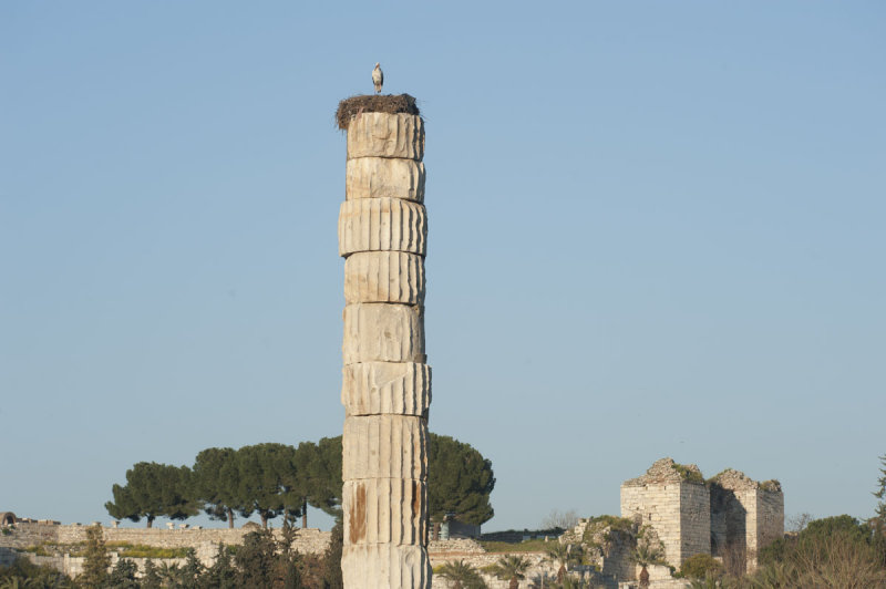 Selcuk Artemis Temple March 2011 3452.jpg